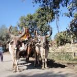 Indien-vom Somnath Tempel in Gujarath auf die Insel Diu