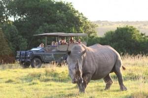 Pirschfahrt im Lalibela Wildreservat