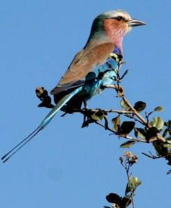 Paradies für Vogelliebhaber