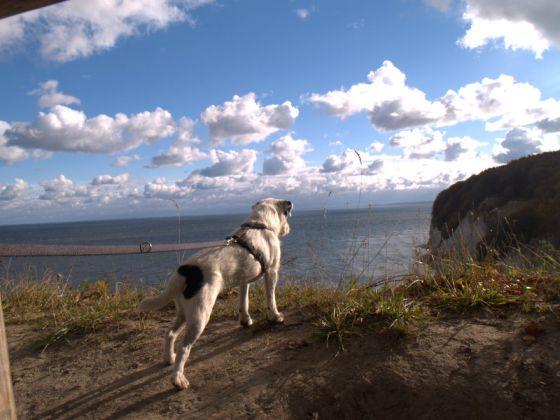 Single mann hund Kopenhagen Art Institute: Mann beißt Hund