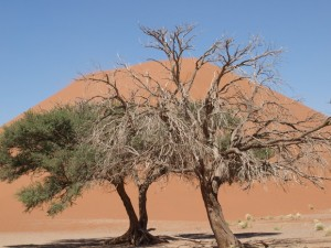 Sossusvlei Sanddnen
