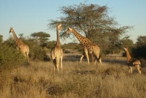 Tiererlebnis Namibia