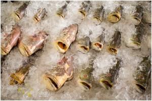 frischer Fisch in Reih und Glied