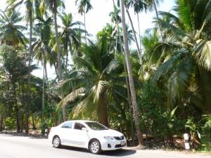 Toyota vor Kokospalmen