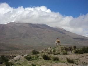 Peru Reise zum Colca Canyon