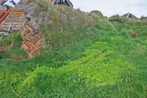 Ruinen auf Langanes - Nordost-Island