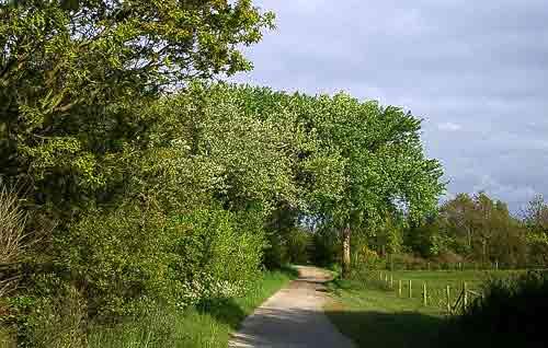 Fahrradwege durchziehen die ganze Insel Terschelling