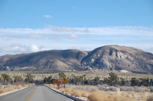 Mietwagenreise zum Joshua Tree National Park