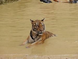 Tigertempel Wat Pa Luangta Bua