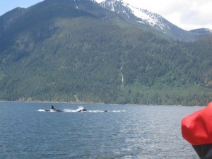 Speed Boat Tour - Orcas