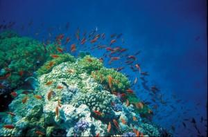 Robinson Club Soma Bay Unterwasserwelt