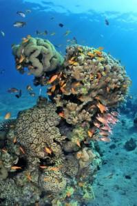 Tauchen in Aqaba bei den Extra Divers