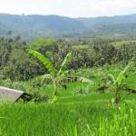 Hotels auf Bali - The Pavillions Bali, Puri Lumbung und Alam Anda Dive & Spa Resort