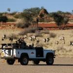 Namibia Hochzeitsreise - Flitterwochen der besonderen Art auf dem schwarzen Kontinent