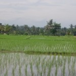 Bali Rundreise im Luxusresort Ubud Hanging Gardens und Bali Resort Alila Manggis