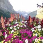 Zugfahrt mit dem Rocky Mountaineer von Banff nach Vancouver