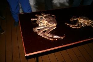 Königskrabben auf der MS Midnatsol