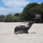 Wochenende auf San Cristóbal und Galápagoskreuzfahrt mit der Treasure of Galapagos