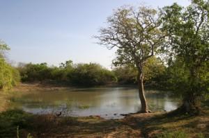 Wasserfläche im Yala-Nationalpark