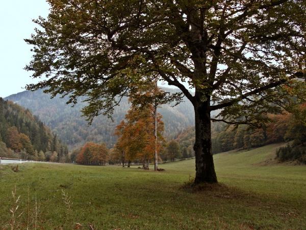 Holzhüttenboden, im Tal der Ois