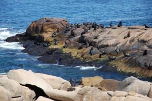 Cabo Polonio und seine Seelöwen am Leuchtturm