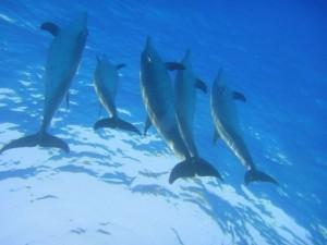 Singles schnorcheln mit Delfinen
