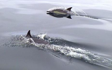 Delfine und Wale erleben
