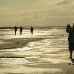 Schleswig-holsteinisches Wattenmeer: Ein Kleinod an der deutschen Küste