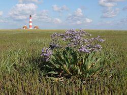 Leuchtturm Eiderstedt, copyright WWF