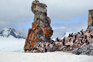 Antarktis Reise Pinguine