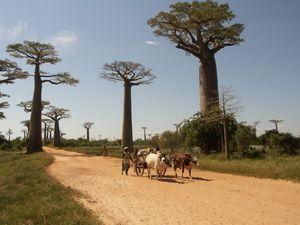 Rundreisen in Madagaskar