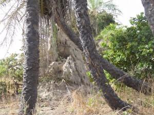 Natur im Sine Saloum Delta