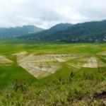 Spinnennetz-Reisfelder Labuhan-Bajo