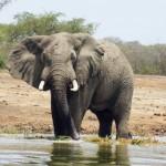 Reisen nach Uganda