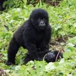 Reisen nach Uganda: Die Perle Afrikas