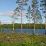 Schweden Birkenlandschaft