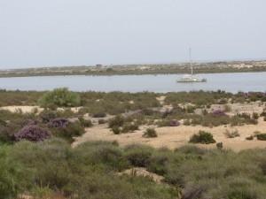 Strände bei Tavira-nur mit dem Boot erreichbar