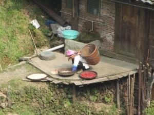 Reis und Chillischoten