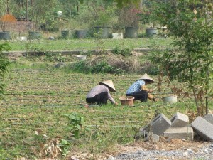 Reisbauern