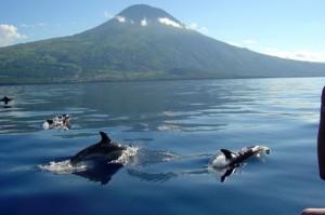 Pico-Delfine