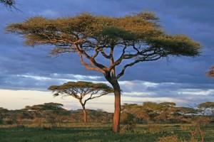 Tansania-Erlebnisreise