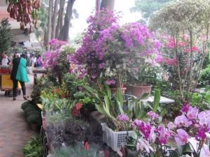 Blumen Markt in Kowloon