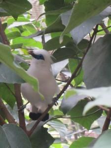 einer der tropischen Vögel im Park