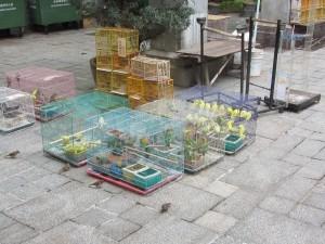 der Vogelmarkt