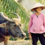 Reise nach Laos und Vietnam - 2 Juwelen Indochinas