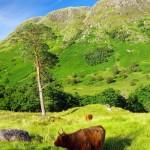 Eine Schottland Busrundreise mit Gleichgesinnten erleben