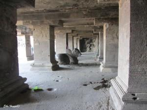 Nandi Stier, das Reittier Shivas