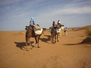 Kameltrekking in der Wüste