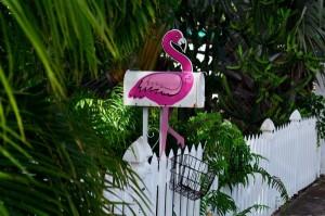 Zaunverschönerung - Impressionen Floridas