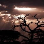 Wunderschöne Tansania und Sansibar Kleingruppenreise